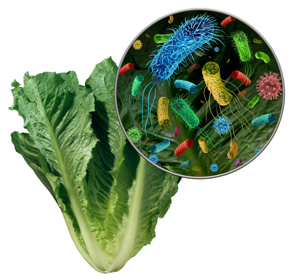 Bacteria On Vegetables
